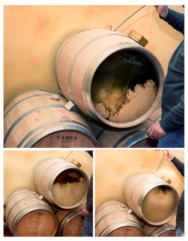 葡萄酒中的坚果味
