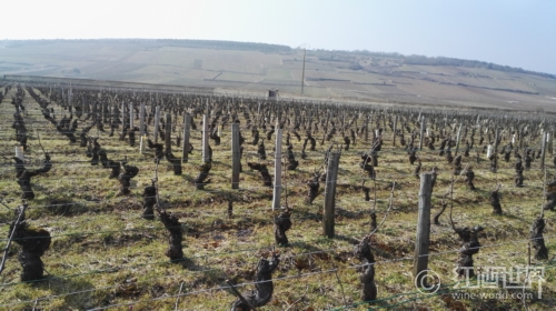 雹暴再次肆虐,法国上万公顷葡萄园被损