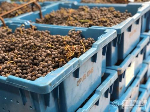 深秋记之采摘葡萄时要干些什么?