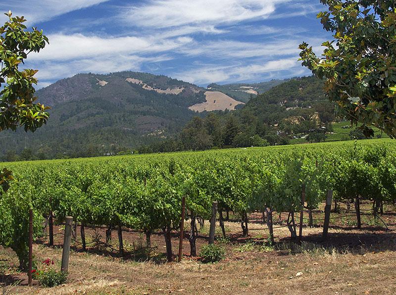 2009年份玛尔卡森霞多丽白葡萄酒