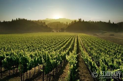 """""""富人镇""""的葡萄酒——解密勃艮第李奇堡特级园"""