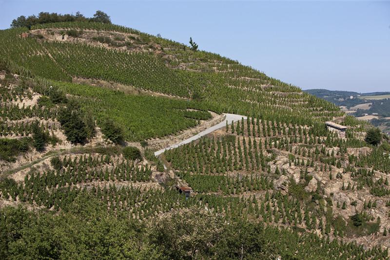罗纳河谷葡萄园多样的风土条件