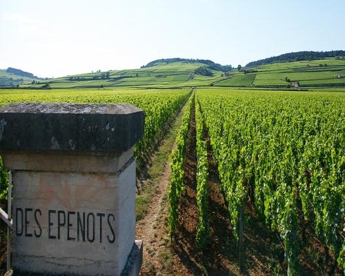 勃艮第玻玛村或将诞生3个顶级葡萄园