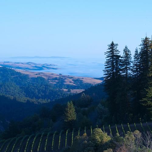 加州优质黑皮诺产区概览