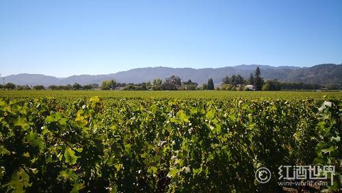加州:美国葡萄酒朝圣地