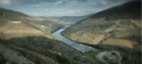 杜罗河谷产酒区新地图即将拍卖