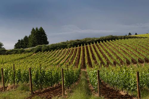 勃艮第顶级酒商于美国俄勒冈州首度收购葡萄园