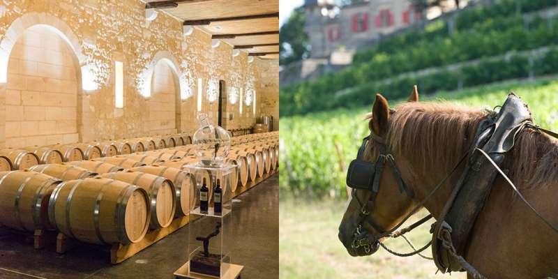 梅多克分级故事:历史,葡萄酒与情怀