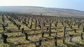 世界十大最美丽葡萄酒产区