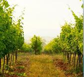 恬宁酒庄Domaine de Triennes