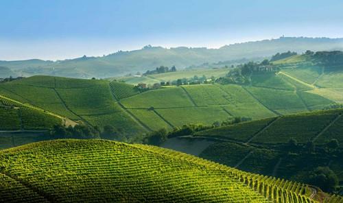 一文知晓意大利本土经典红葡萄品种