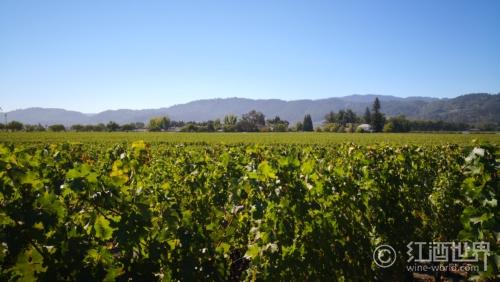 森林大火威胁加州蒙特利县内的葡萄园