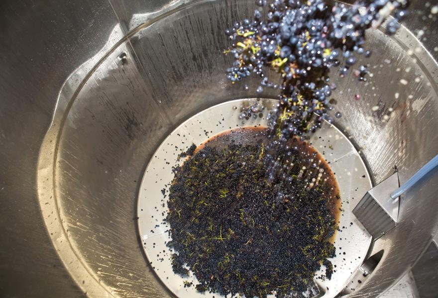 多图 | 葡萄酒生产全过程