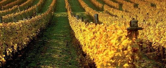 值得一去的世界文化遗产葡萄酒产区