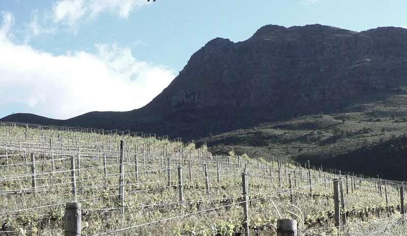 南非十佳酒庄