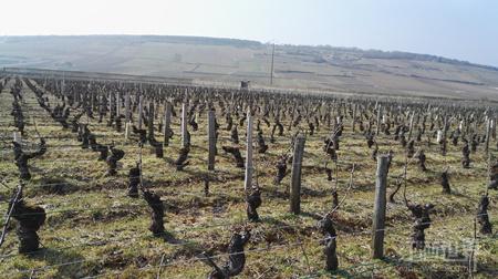 2014年份勃艮第葡萄酒发售在即——红葡萄酒年份全解析