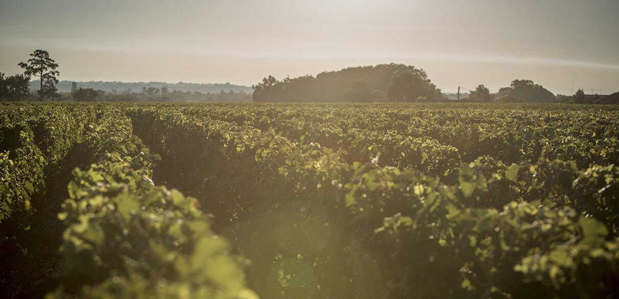 波尔多1855列级酒庄分布图之玛歌
