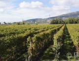 1998年份维埃蒂酒庄布鲁纳特巴罗洛红葡萄酒