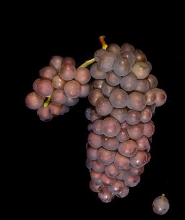 園中瓊玉,細聊葡萄種類