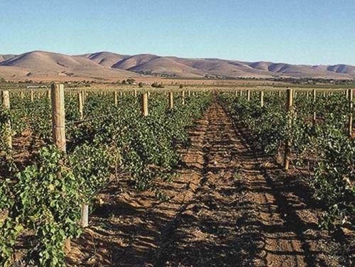 南澳州:澳大利亚葡萄酒的心脏