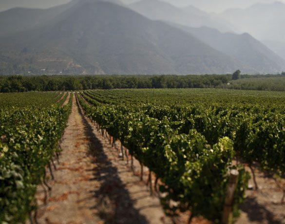 走近智利中央山谷产区