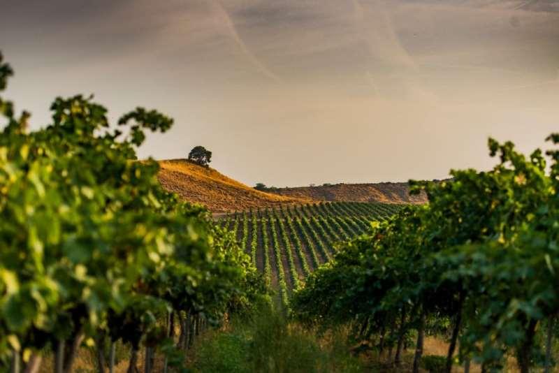 钟爱西班牙葡萄酒?这些产区不可不知