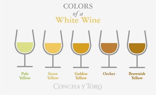 葡萄酒如何分类?