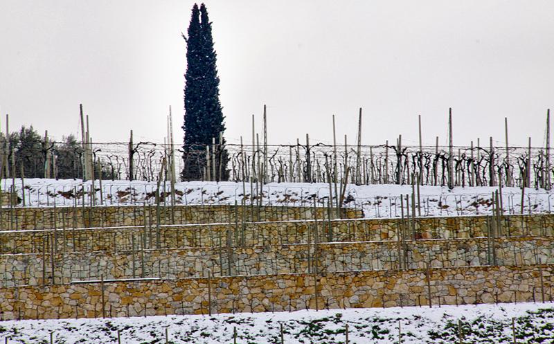 福山酒庄:瓦坡里切拉百年精品名庄