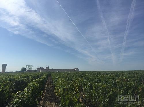 波尔多产区将授权使用新的葡萄品种?
