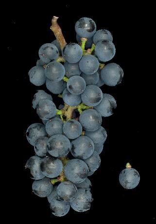 扒一扒那些冷凉气候下的葡萄酒