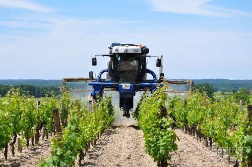 金秋9月——法国葡萄采收季节