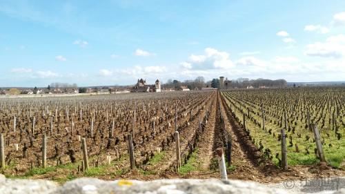 世界主要产酒国葡萄酒的典型风味