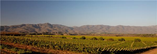 赛卡溪葡萄园(Quebrada Seca)
