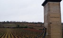 """那些都叫""""蒙哈榭""""的勃艮第特级葡萄园"""