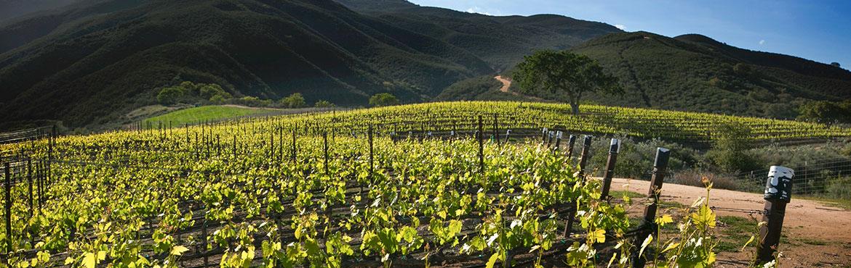 加州圣特露西亚高地5大酒庄