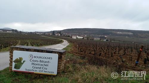 盘点世界主要红葡萄酒生产大国