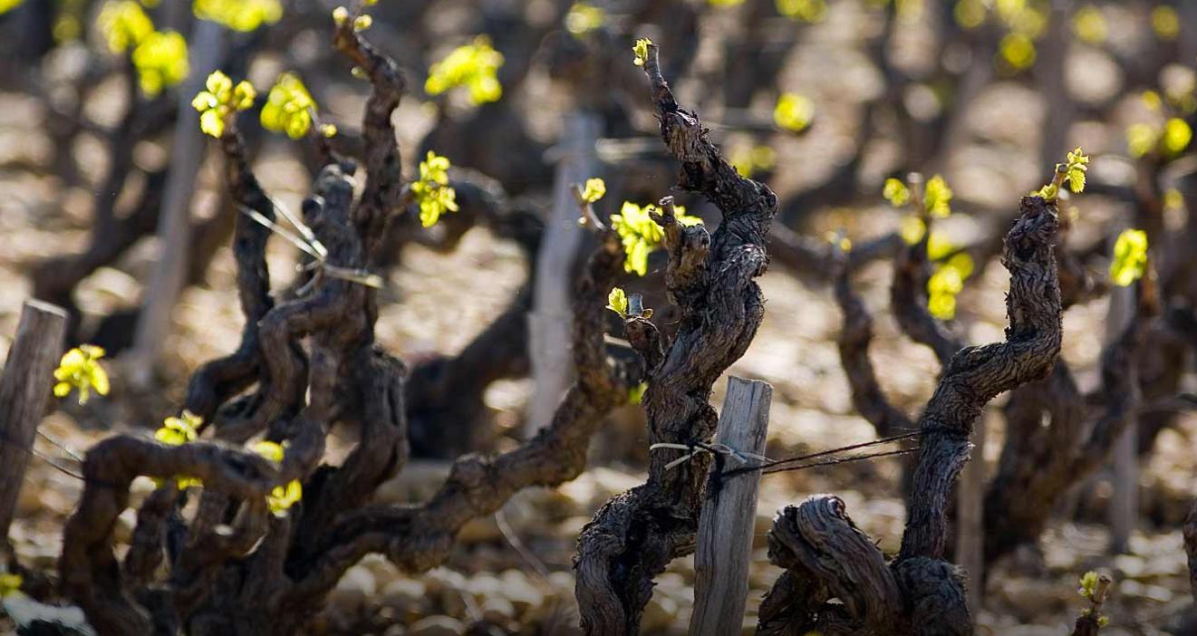 世界顶级葡萄酒——1989博卡斯特尔雅克-佩兰干红葡萄酒