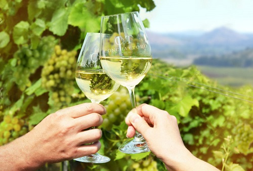 智利葡萄酒最亮的星——干露酒庄