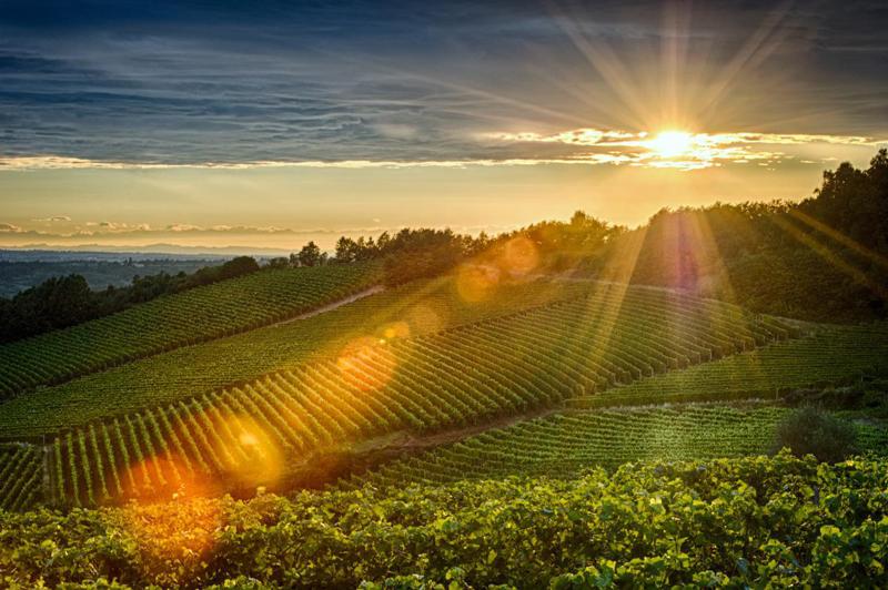 来杯清新脆爽的意大利白葡萄酒吧!