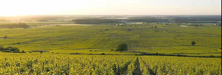 BH91分马尼安黑皮诺,品味莫雷-圣丹尼一级园的优质风土
