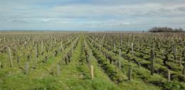波尔多气候与葡萄种植