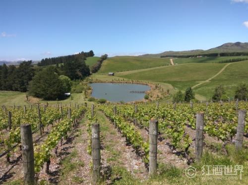 2013年是新西兰葡萄酒的靓年