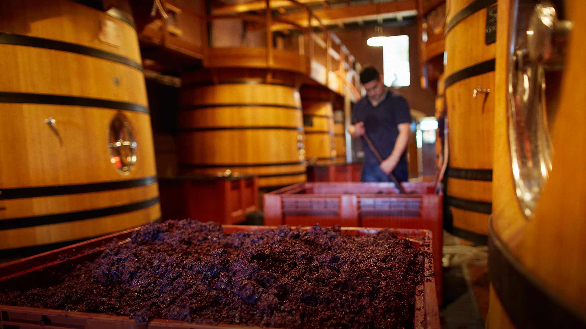 葡萄酒的萃取是怎么一回事?