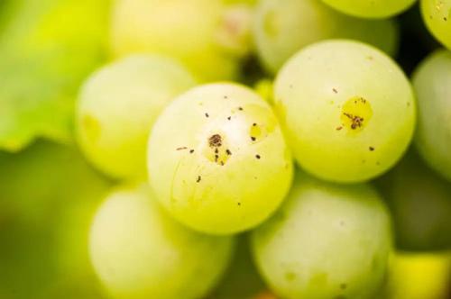 我的葡萄酒可以陈年吗?