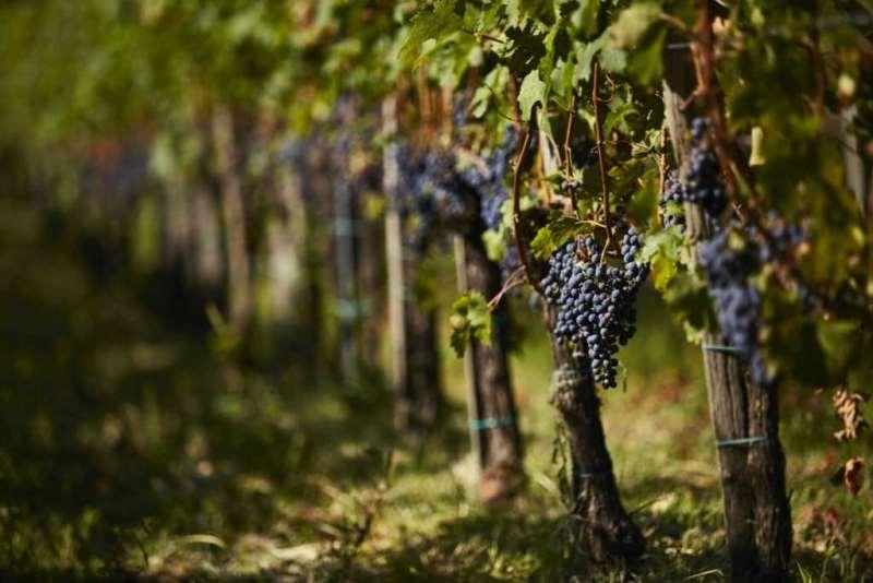 匈牙利葡萄酒概述