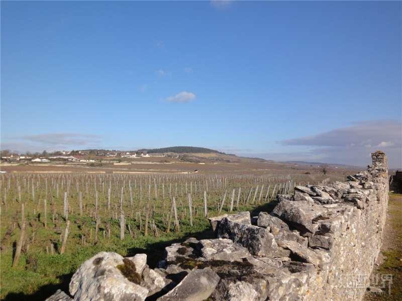 红酒世界勃艮第名庄探访之旅——约巴德酒庄