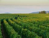 1995年份芙萝酒庄腾盛乐宫(默尔索村)白葡萄酒