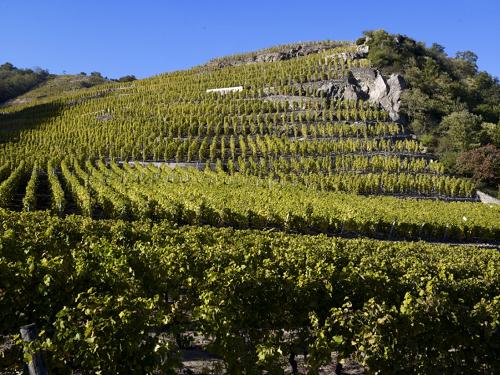红酒世界对话罗讷河谷葡萄酒行业协会