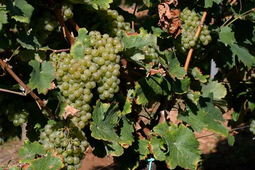南非葡萄酒的多彩风格秀