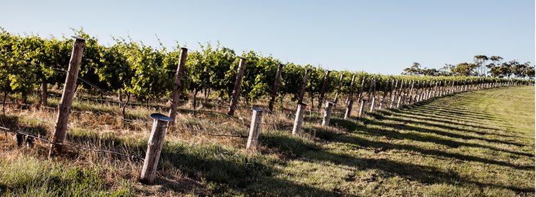 澳洲对华葡萄酒出口猛增,增幅高达66%